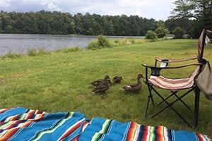 ducks by Lake Jean in Rickett's Glen State Park