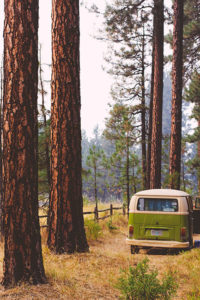 a vw van in tall trees